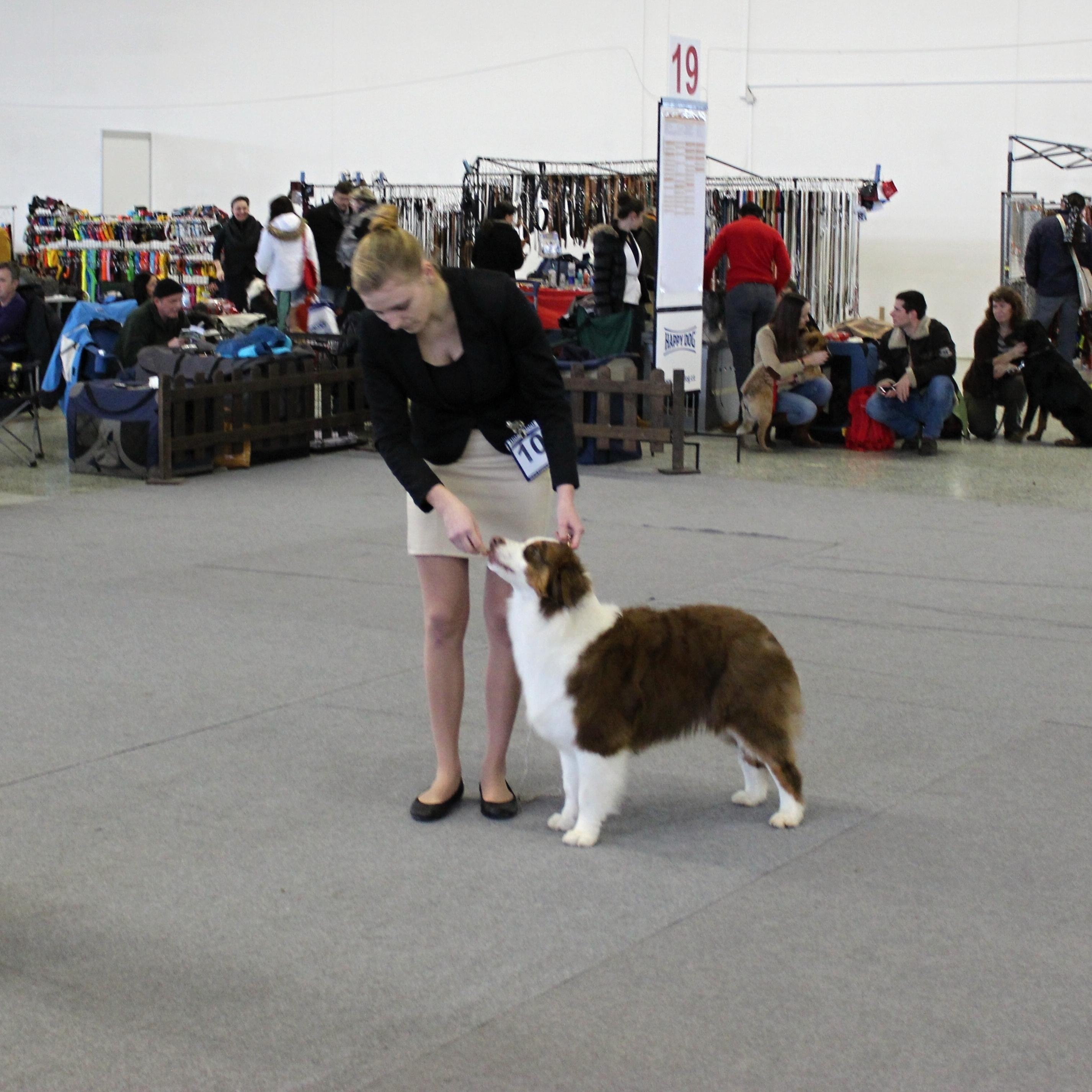 Puppy - VN 2