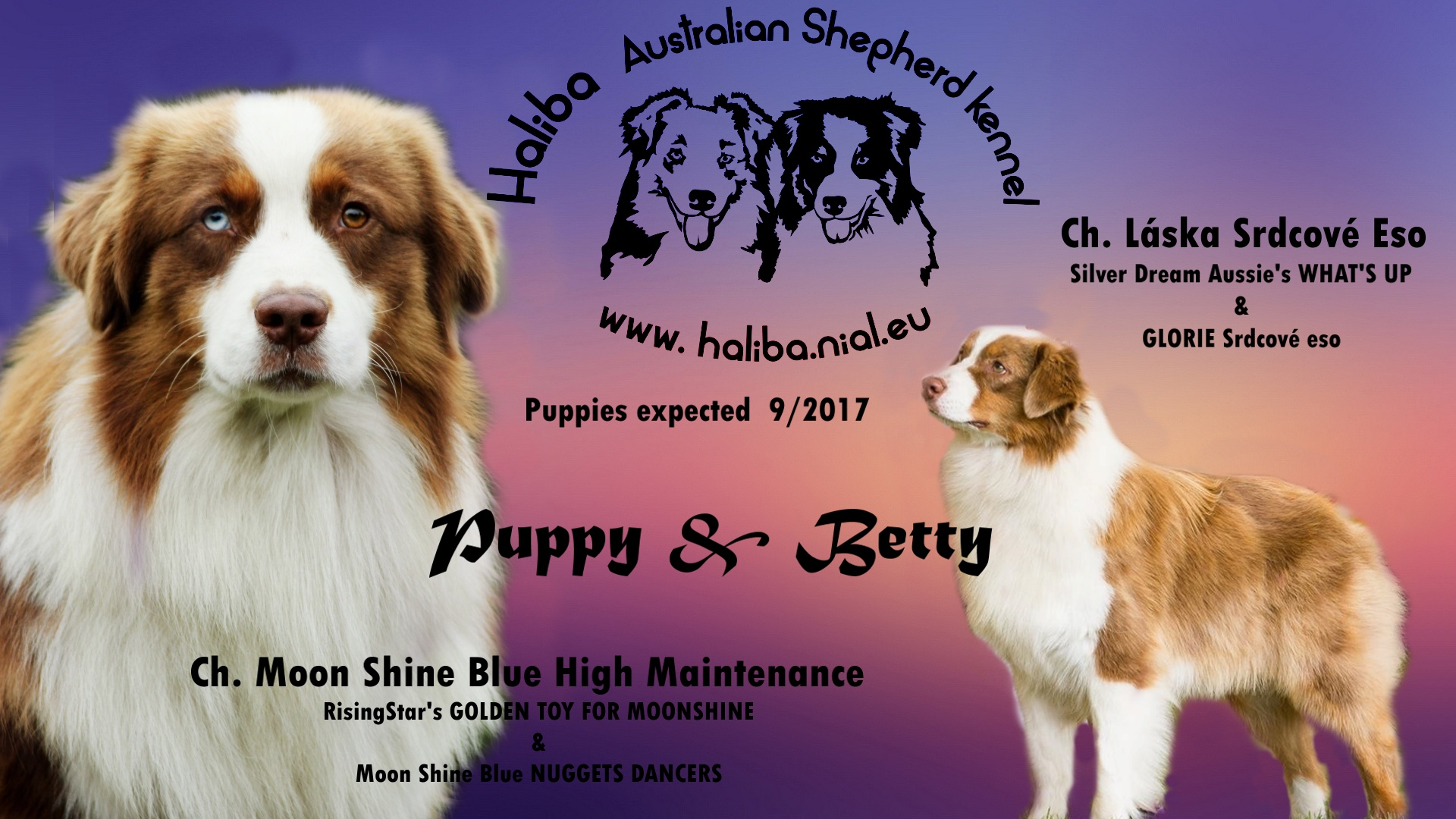 Puppy Betty